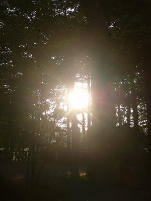 白山比神社の光