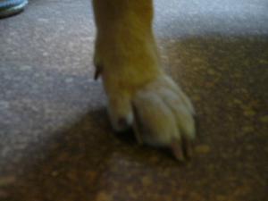 爪の横に赤いプチ