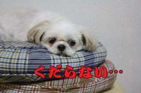 012_20081010142954.jpg