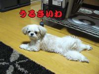 20080815-3.jpg