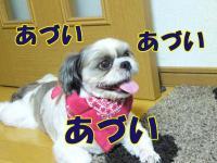 20080815-5.jpg