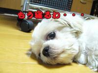 20080815-7.jpg