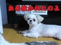 20080909-6.jpg