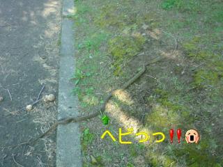 20090802034600.jpg