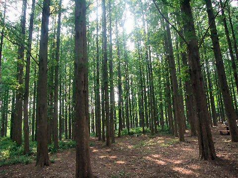 2009_0619katsushika0031.jpg