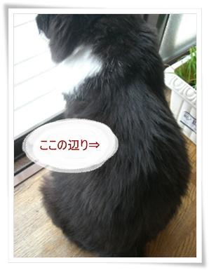 ぴ9.6.23④