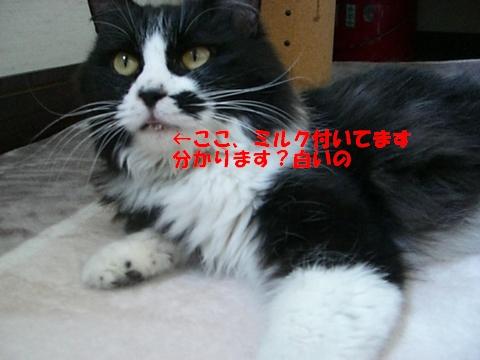 ぴーちゃん5/1