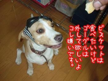 DSC00373.jpg