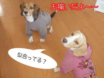 DSC01763.jpg