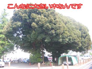IMG_0451.jpg