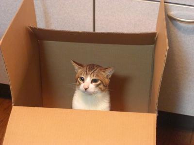 やっぱり箱が好き!