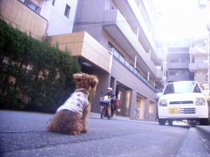 2009-1-16youchien1.jpg