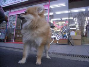 2009-1-21youchien4.jpg