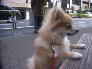 2009-1-28youchien3.jpg