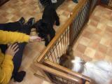 2009-2-23youchien5.jpg