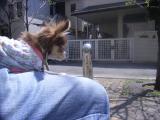 2009-4-9youchien2.jpg