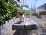 2009-4-9youchien3.jpg