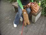 2009-5-12youchien3.jpg
