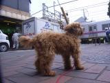 2009-5-12youchien7.jpg