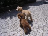 2009-5-15youcuien2.jpg