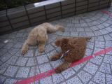 2009-5-15youcuien4.jpg
