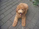 2009-8-26youchien2.jpg