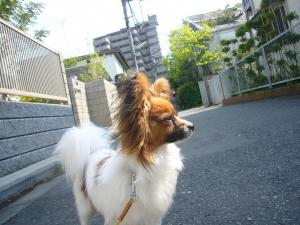 itakura216.jpg