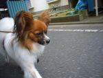 itakura22_20090615222810.jpg