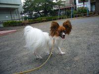 itakura250_20090825225543.jpg