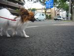 itakura269_20090830221218.jpg