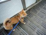 itakura298_20090906114820.jpg