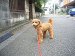 itakura327_20090906144941.jpg