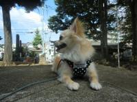2010-10-7kino5.jpg