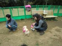 2010-11-11kino4.jpg