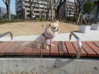 2010-2-23hoikuen8.jpg