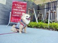 2010-5-28kino2.jpg