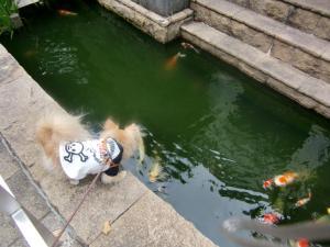 2010-6-18kino8.jpg