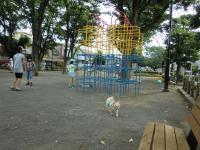 2010-6-25kino13.jpg