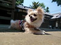 2010-6-4kino5.jpg