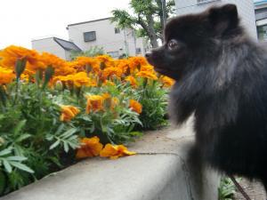 2010-6-7jiro17.jpg