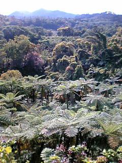 ヤンバル亜熱帯園