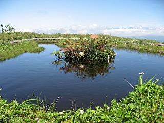 6月中旬浮島のある池塘