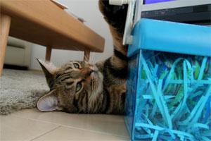 猫の手キタ!1