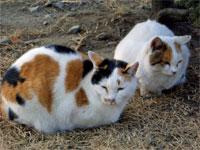 お城の猫1