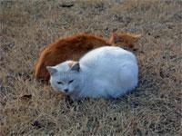 お城の猫2