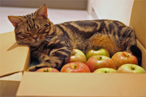 りんごの上で爆睡