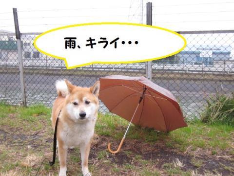 雨、キライ