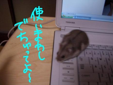 CIMG1746.jpg