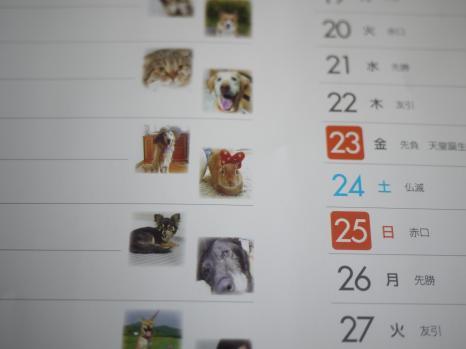 P1010901_convert_20101130144910.jpg