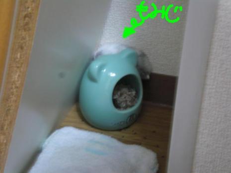 omiji_20100702124457.jpg